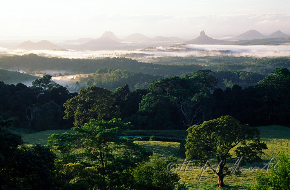 morning mist over the Glass House Mountains