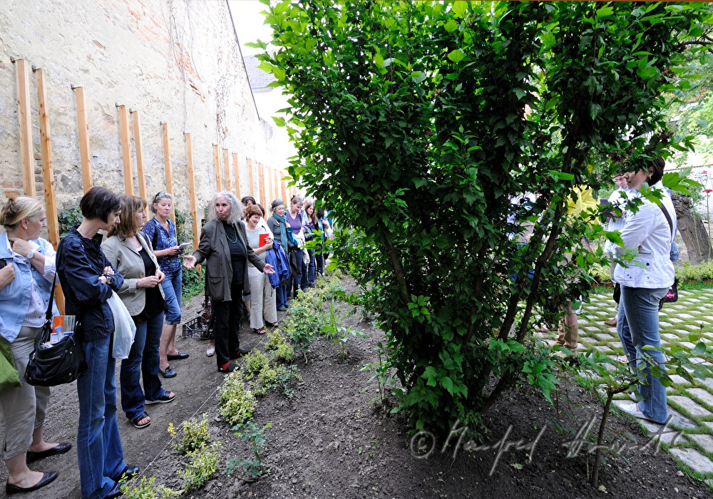 Manfred horvath open house in the herbal garden for Open house photos